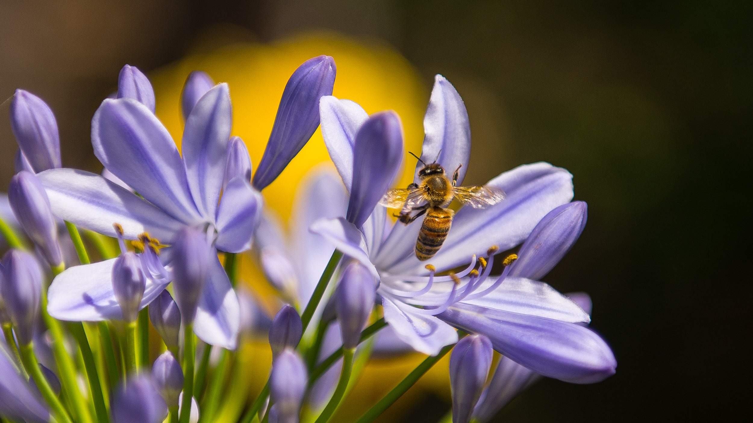be believable like this bee