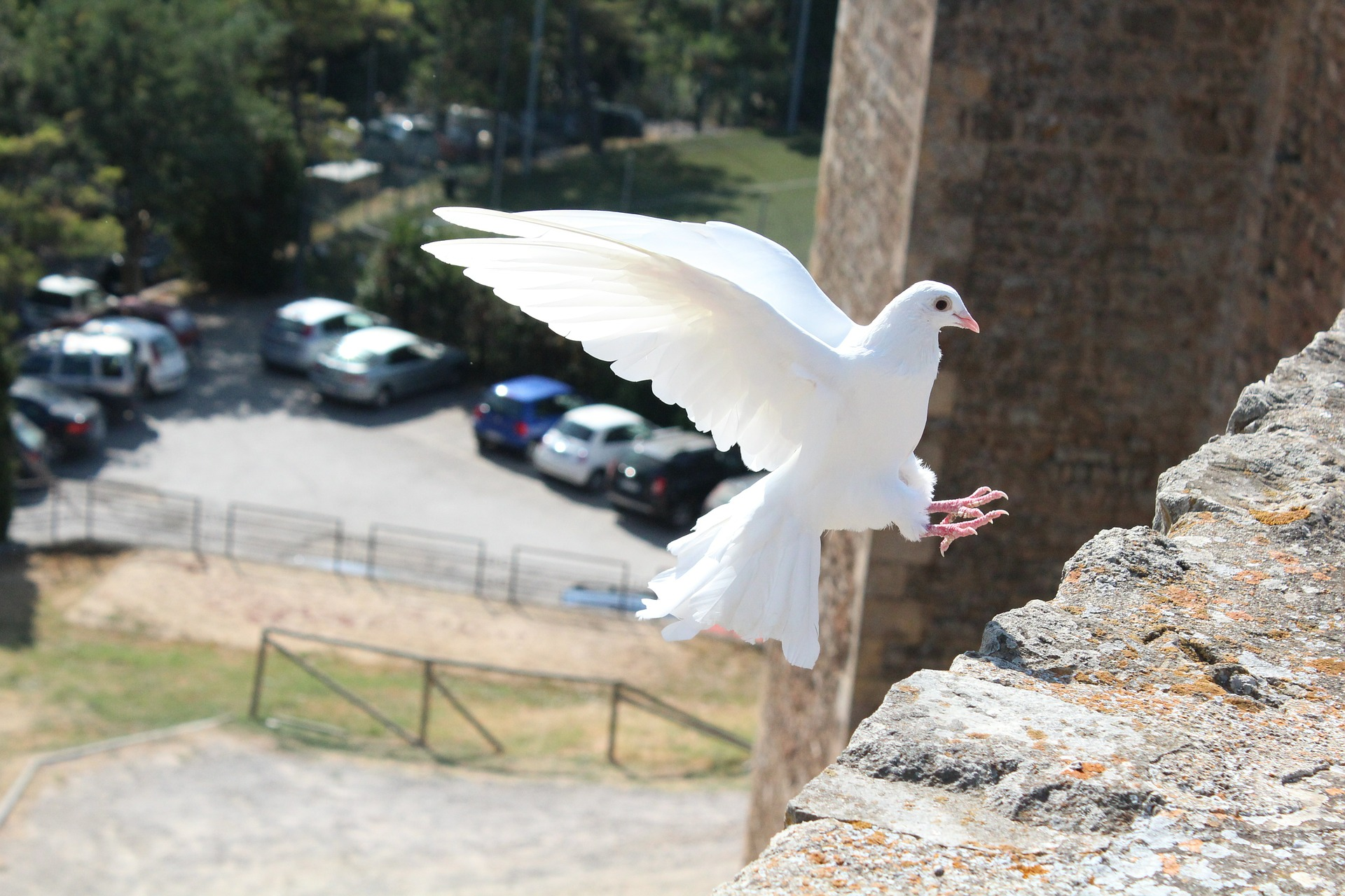 Bird ofpeace